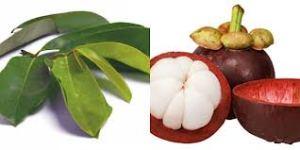 Pengobatan Batu Empedu Herbal